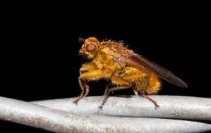 Ugly fly by mant01