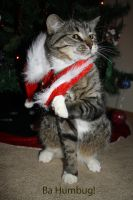 Sammy the bad santa cat by Mab-overthrown