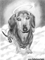 Dachshund Angel by Katerina-Art