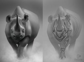 Rhino studies by VertexBee
