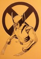 Wolverine on colored paper by Dangerous-Beauty778