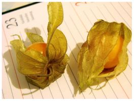 physalis duo 2 by moodyline