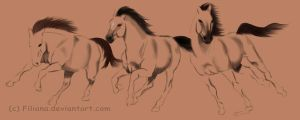 Horse sketches... by Filiana
