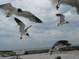 in flight_0025 by flordelys-stock