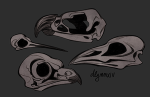 bird skulls by drawnbydana