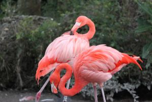 00249 - Flamingo Pair by emstock