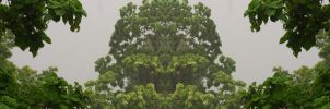 Organic Symmetry 11 by meathive
