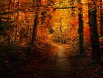 Autumn Forest Trail - Premade BG by Emerald-Depths