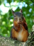 Squirrel 124 by Cundrie-la-Surziere