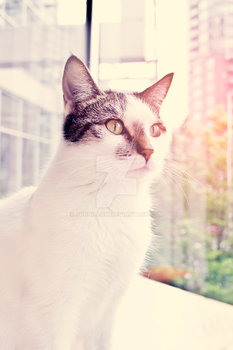 Vancouver Cat Cafe by Sunhillow
