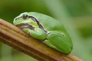 I have told you lately that i love treefrogs by andabata