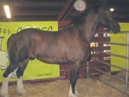 Draft horse stock 2 by horse-stock