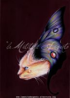 Illustration The Catterfly 2014 by laMatitadArgento