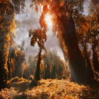 untouched world by ildiko-neer