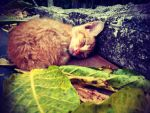 sleepy kitty by rAtser