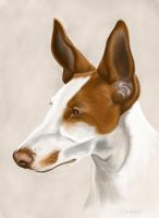 Podenco by SheenaBeresford