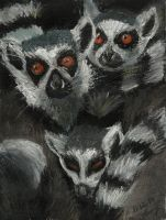 Lemurs by ghostexist