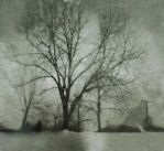Pinhole Tree 2 by sexylibrarian