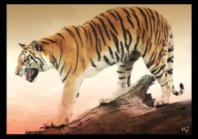 Tiger by Globaludodesign
