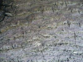 Bark texture by Cat-in-the-Stock