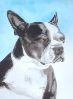 Boston Terrier by RamonaQ