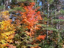 Autumn Color in New England 7 by Reddawgi