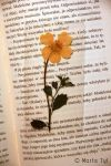 flower bookmark by Tylek