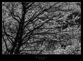 Roots by Mr808