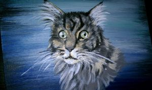Rocky the Maine Coon by dannabats