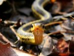 Garter Snake by MIKEmysterious