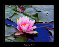 Water Lily by indja-art