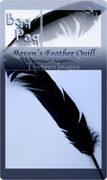 Raven's Feather Quill Pack by Baq-Stock