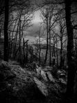 Dead Wood by Torkhelle