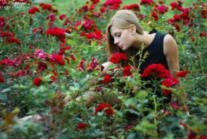 in the rose garden by Juelej