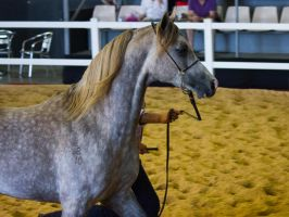 STOCK - 2014 Total Equine Expo-94 by fillyrox