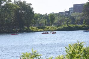 Kayaking and Canoeing On the Charles, Summer Day 2 by Miss-Tbones
