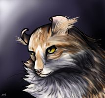 American Curl by Scink