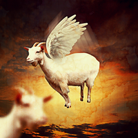 flying goat by Aminebjd