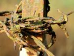 rust and dirt by Mittelfranke