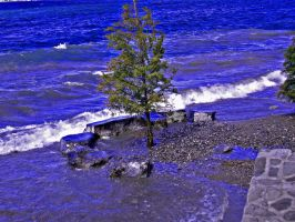 Beached Tree 2 by mitzideon
