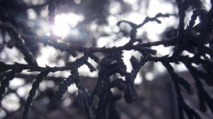 Tree fence by Mihil