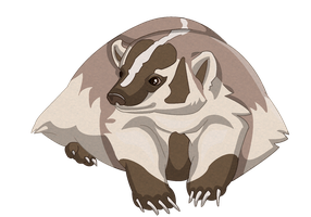 American Badger by DharmaNow