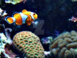 Finding Nemo by lady-buu
