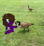 Gabubu with the Geese by Don-Johnny