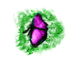 Butterfly by aMyrup