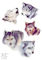 Wolf sketches by ChildProdigy7