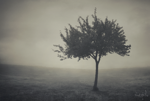 A tree grows ... by DrumsOfWar
