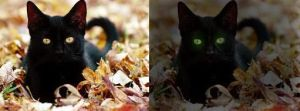 .:Hollyleaf:. How To Edit Pictures by blackyball22