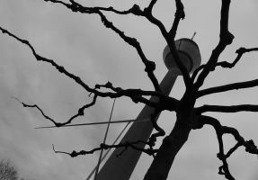 bare branches by flurina