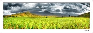 Taro Root Plantation by kimjew